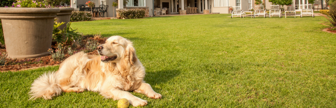 How to Pet Proof Your Home and Yard