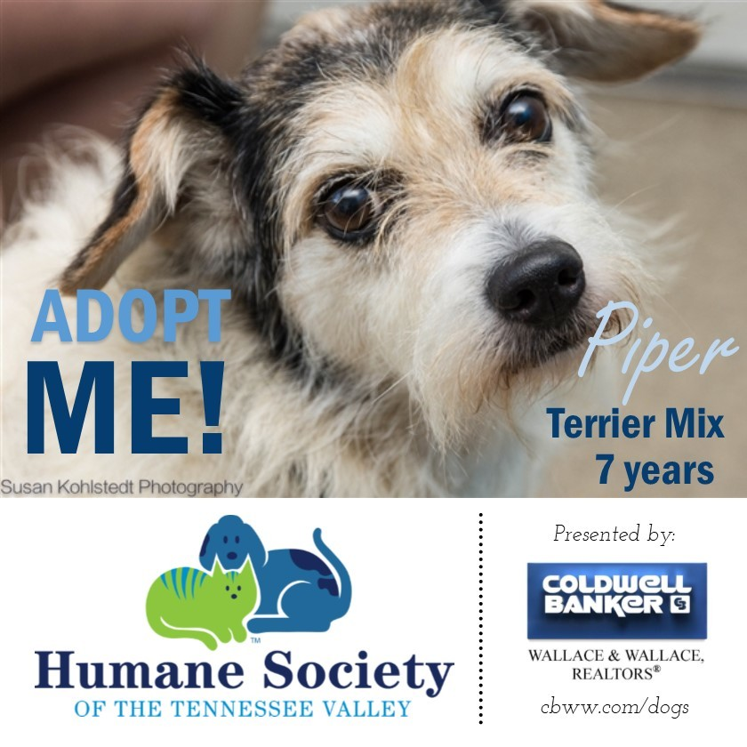 Adoptable Shelter Dog in East Tennessee