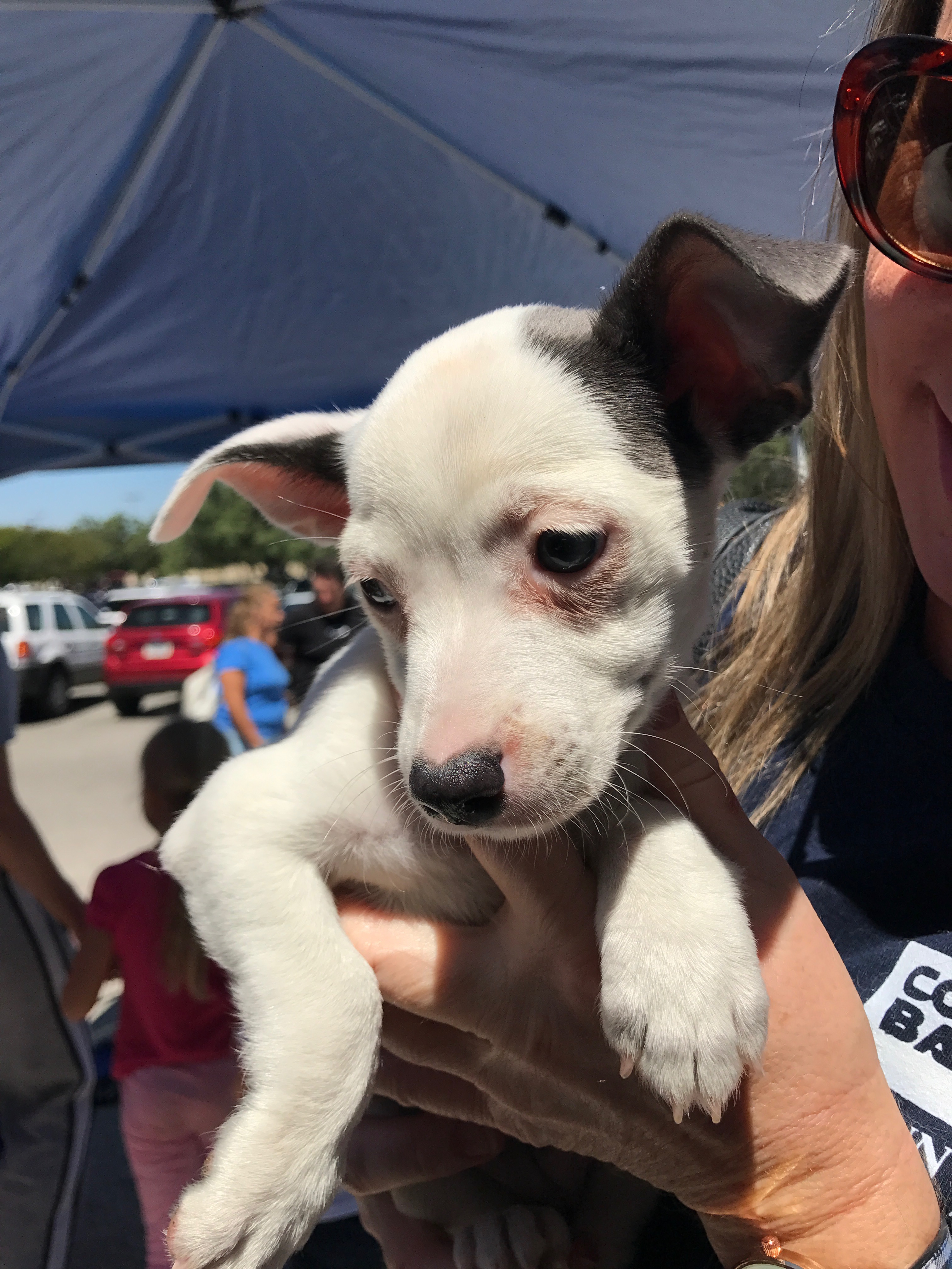 Adoptable puppy named 'Moana'