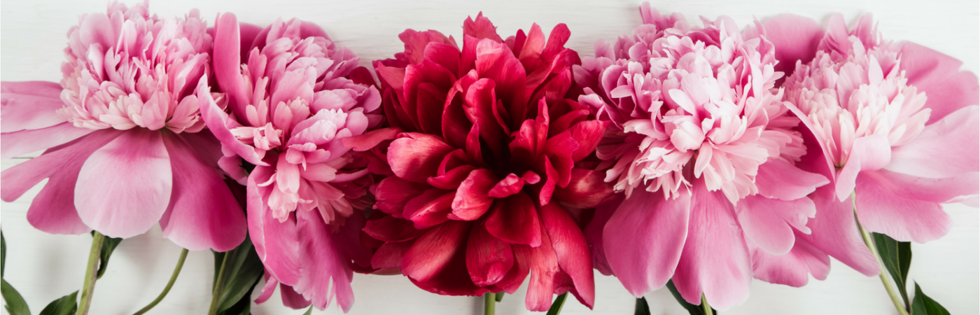 Romantic Plants for Your Valentine